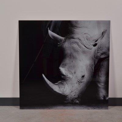 tableau animal en verre rhinocéros