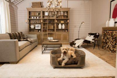 Canapé tendance pour chien et chat
