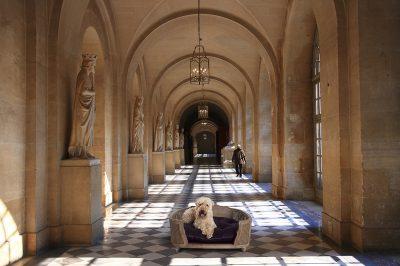 Panier luxe pour chien et chat