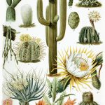 Cactus Metal Decorelie